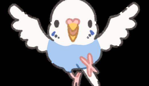 羽根を広げるセキセイインコ【イラスト素材】
